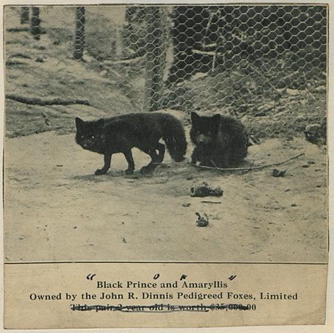 First modern day fur farm