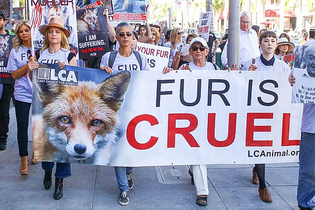 The Rise of the Anti-fur Movement