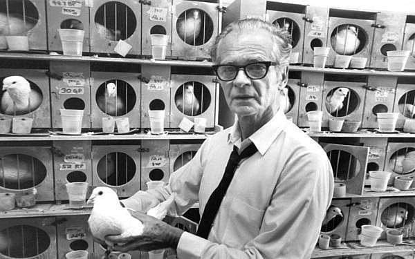 """B. F. SKINNER """"Walden Dos"""" y experimento de """"La superstición de las palomas"""""""