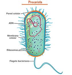 Primera cèl·lula autòtrofa
