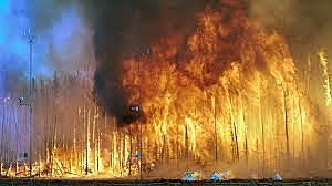 שריפות היער בקליפורניה 2018
