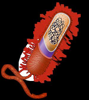 3500 M de Años a.c nacen las primeras celulas