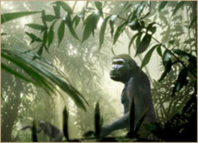 Autralopithecus anamensis