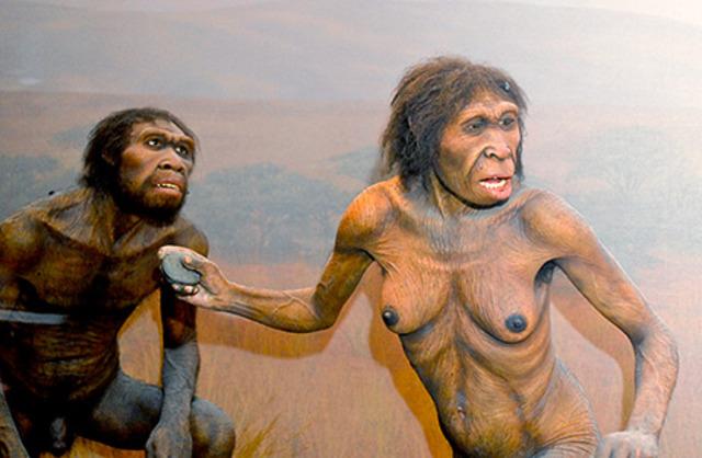 Homo Ergaster va apareixer fa 1,2 milions d'anys