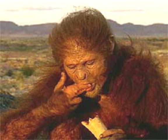 Homo Habilis apareix fa menys de dos milions d'anys.