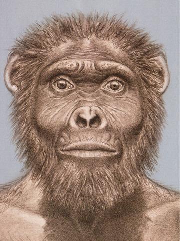 Australopithecus Garhi apareix fa uns 2.5 milions d'anys