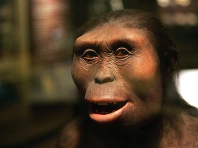 Australopithecus Ramidus va apareixer fa uns 4 milions i mig d'anys