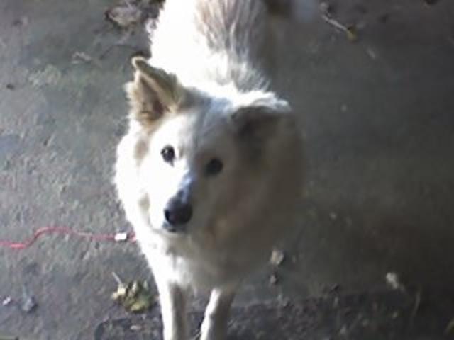 Hace catorce años que recibí mi primer perro Bingo.