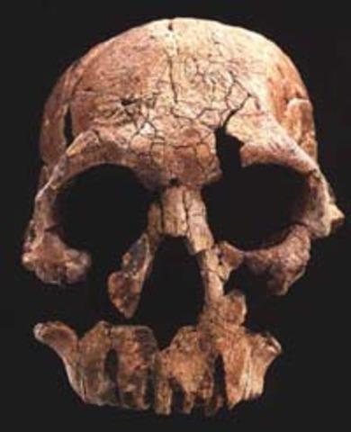 Homo Rudolfensis ( fa uns 1.900 milions d'anys)