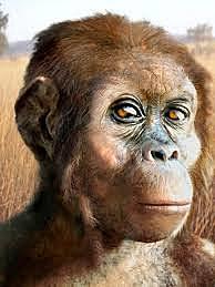 Australopitheucs Afarensis