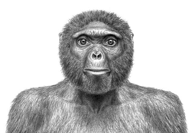 A. RAMIDUS (Fa gairebé 4 milions i mig d'anys)