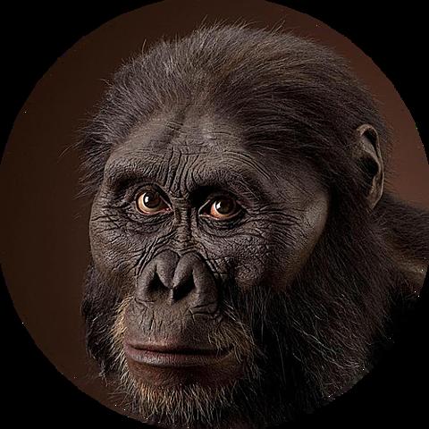 Australopithecus Afarensis (GRUP AUSTRALOPEITHECUS)
