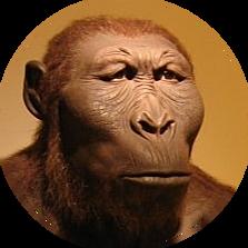 Australopithecus robustus (GRUP AUSTRALOPEITHECUS)