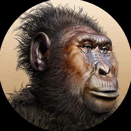 Paranthropus boisei (GRUP PARANTHROPUS)