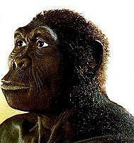 Homo habilis (GRUP HOMO)