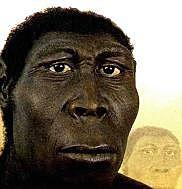 Homo erectus (GRUP HOMO)