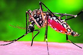 El Zika.
