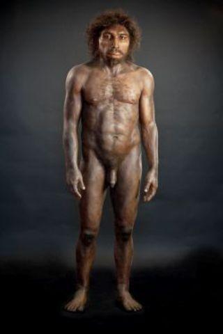 Homo. Rodhesiensis