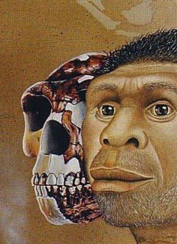 Homo rodhersiensis