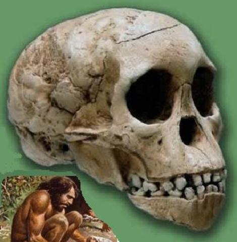 Homo rodhesiensis