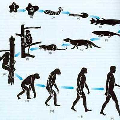 Las musas de Darwin (Segunda parte) timeline