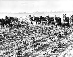 Drought in farmlands continues
