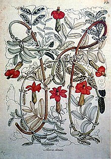 La real expedición botánica