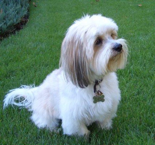 Adopted 2nd dog