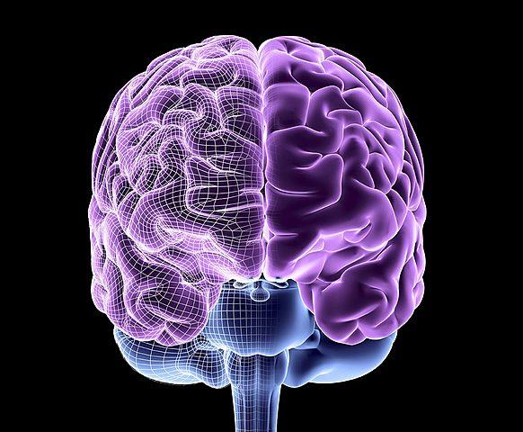 Decada del cerebro