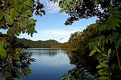 Aparición de Bosques Tropicales.