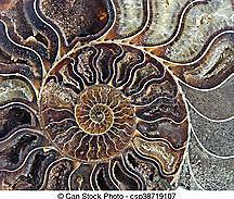 Aparición de los Ammonites.