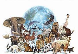 Diversificación de los animales.