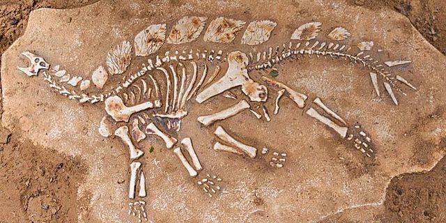 Creación de la Paleontología, Georges Cuvier