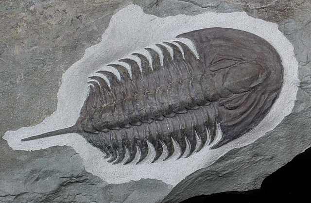 Cambrian (541 millions years ago)