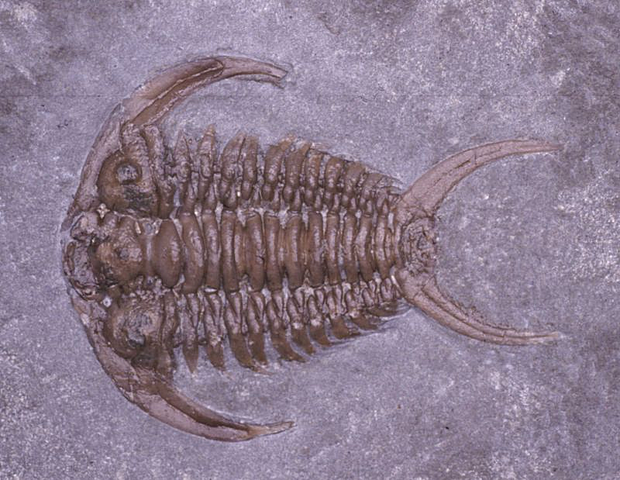 Ordovician (485 millions of years)