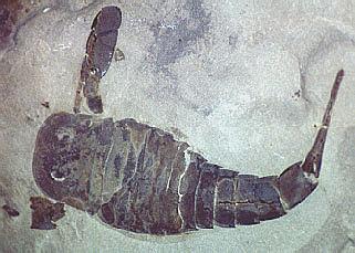 Silurian (443 millions years ago)