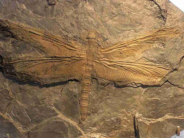 Carboniferous (358 millions years ago)