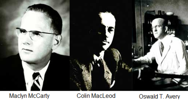 Oswald T. Avery, Maclyn McCarty & Colin MacLeod's Substantial contribution