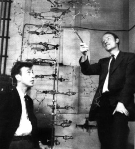 Francis H. C. Crick & James D. Watson discover DNA structure