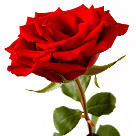 War of Roses (1455~1485)