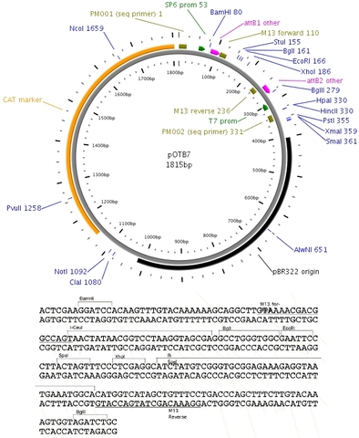 Drosophila Genome Sequence