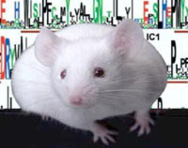 Mouse Genome Sequence
