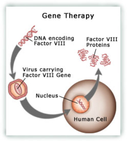 Junk DNA Invaluable