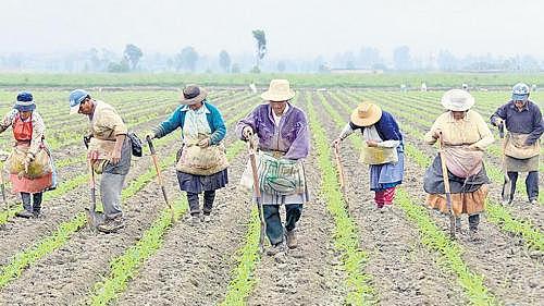 Negociaciones sobre servicios y agricultura