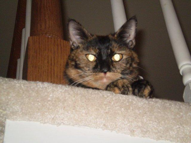 family cat named Peaches had 5 kittens