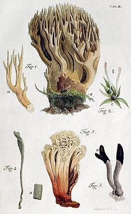 Primera clasificación de hongos