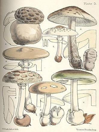 Sistemática de los hongos