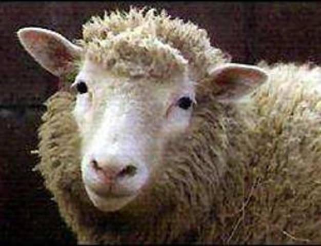 Dolly the Sheep is DEAD.....