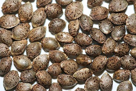 Suministro de semillas