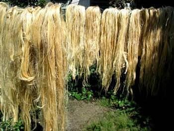 Comercialización se semillas y fibras